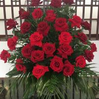 All Saints Day Roses